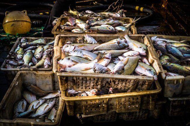 seashepherd_illegal fishing_liberia