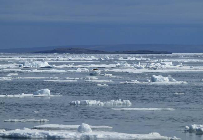 sea-ice-arctic