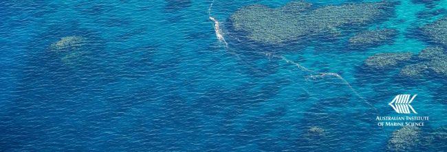 Marine safety technology tracks spawning coral slicks