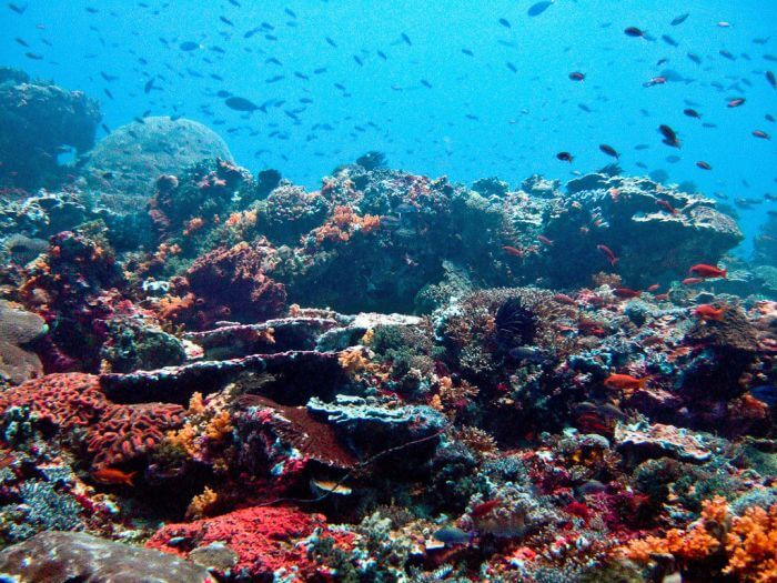 coral reefs benefits